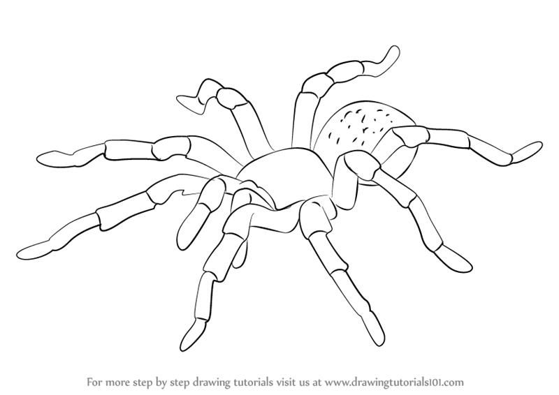 Drawn spider tarantula Tarantula Draw Learn How Draw