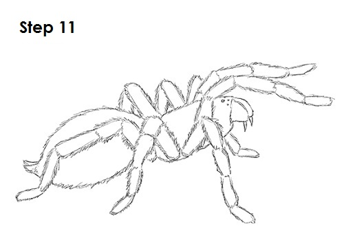 Drawn spider tarantula 11 Draw Draw to How