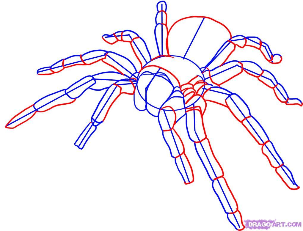Drawn spider tarantula Online Draw draw spider how