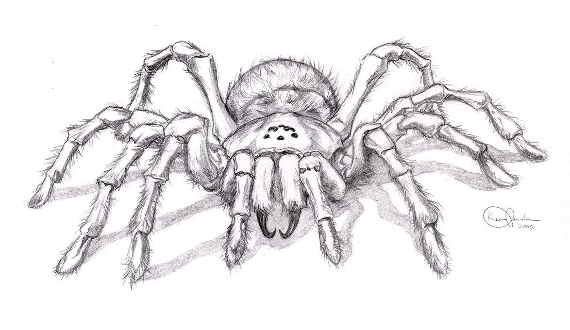 Drawn spider tarantula On Spider Tattoo Tattoo by