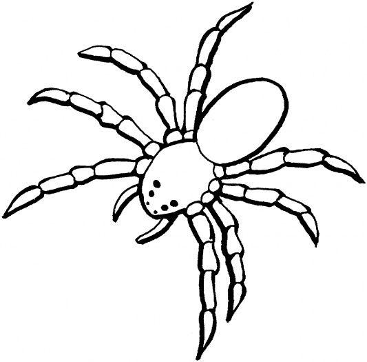 Drawn spider tarantula 29 drawing ( simple Coloring