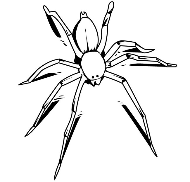 Drawn spider template Spider Free Smart Template &