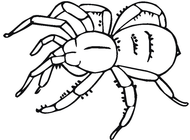 Drawn spider template #1