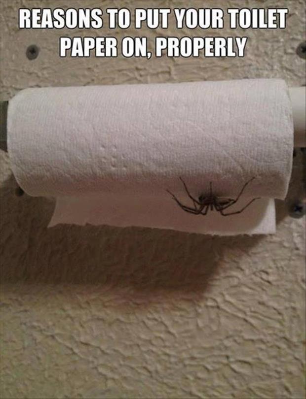 Drawn spider toilet paper #9