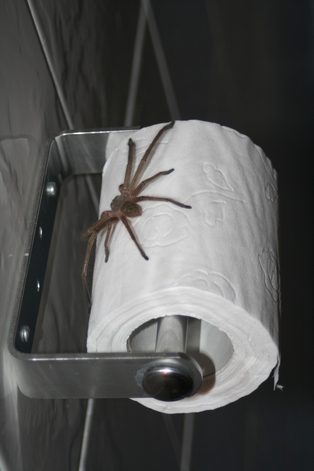 Drawn spider toilet paper Spiders Video Crafthubs Debate Paper