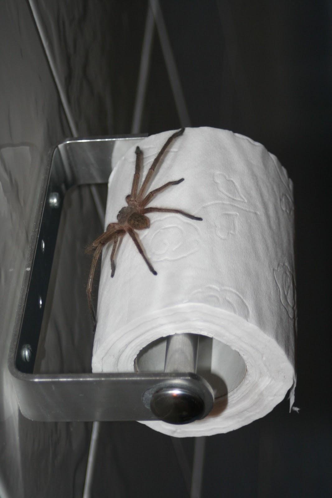 Drawn spider toilet paper #12