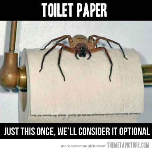 Drawn spider toilet paper #11