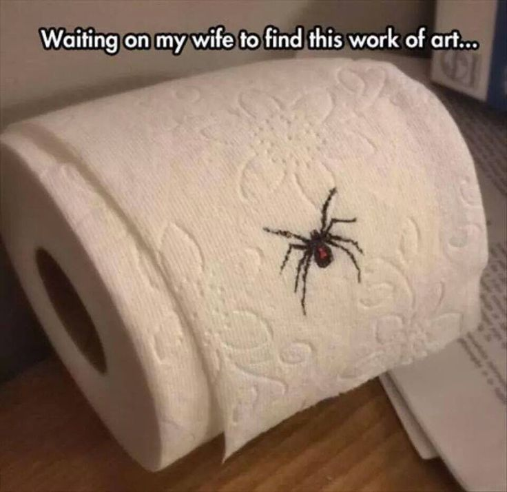 Drawn spider toilet paper Best 114 Yuck! on images