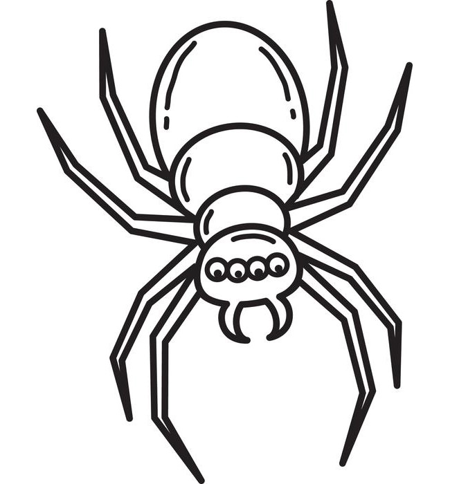 Drawn spider tracing Crafts Free Spider Template Template