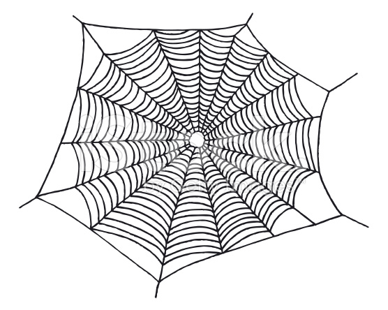 Drawn spider web Web Pencil Realistic Images Art
