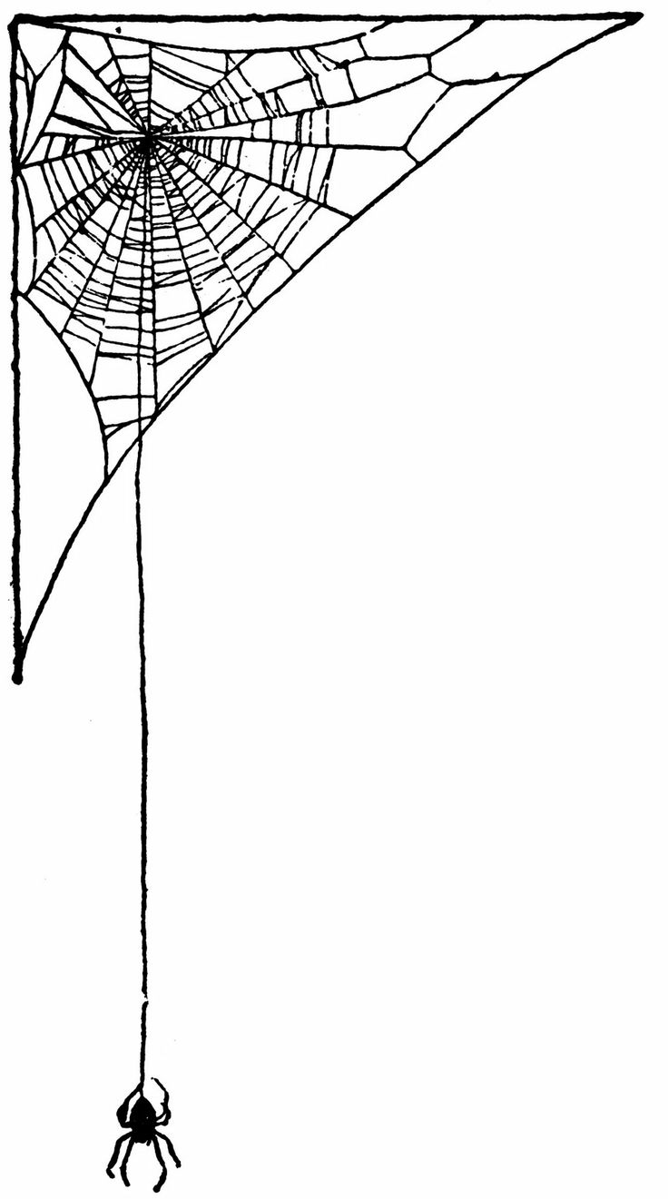 Drawn spider web Web ideas Spider on Ephemera: