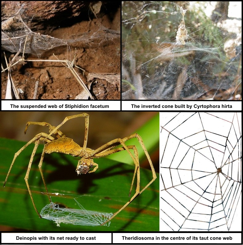 Drawn spider web acid Vision it web see spread