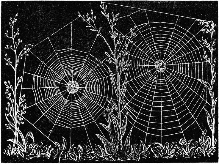 Drawn spider web acid 97 images on Spider Silken