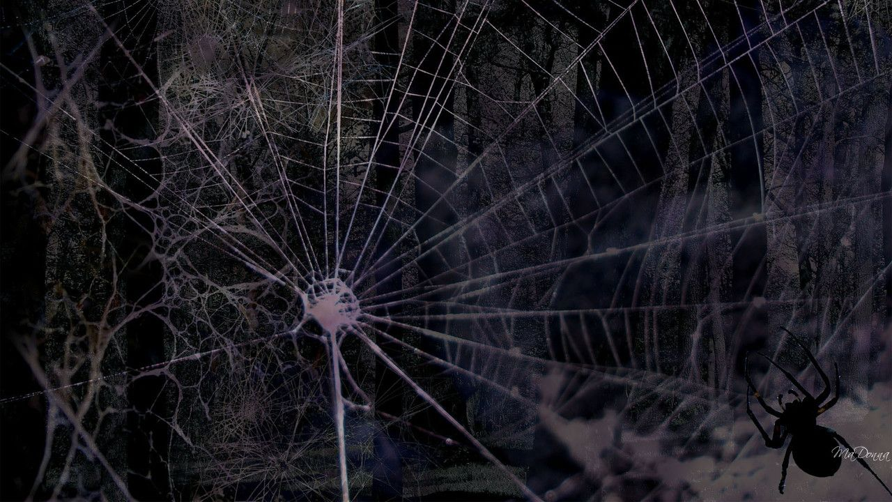 Drawn spider web cave Nature Web Dark Osteotx (1958)