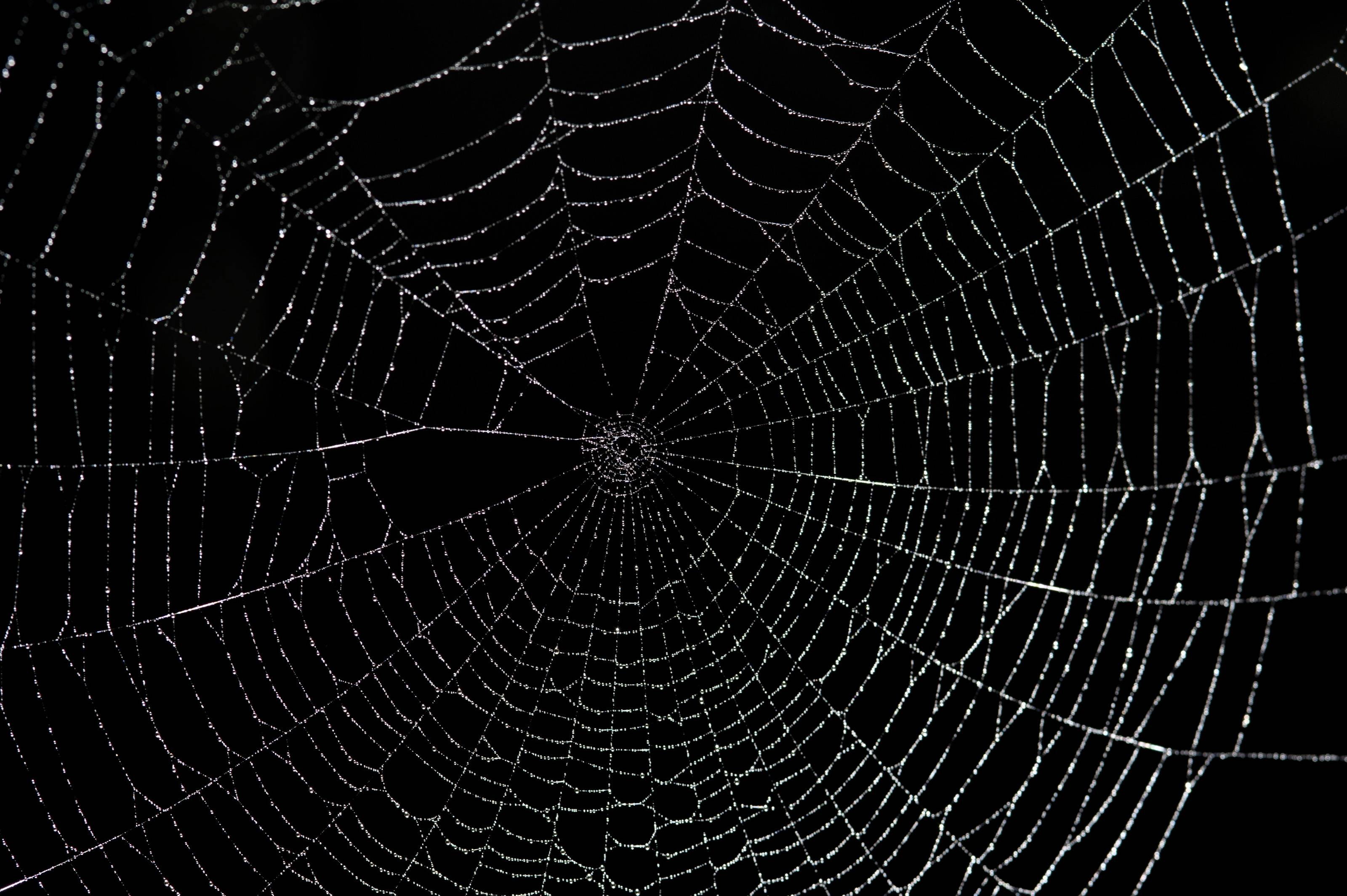 Drawn spider web cave Web Large Wallpaper Stockarch web