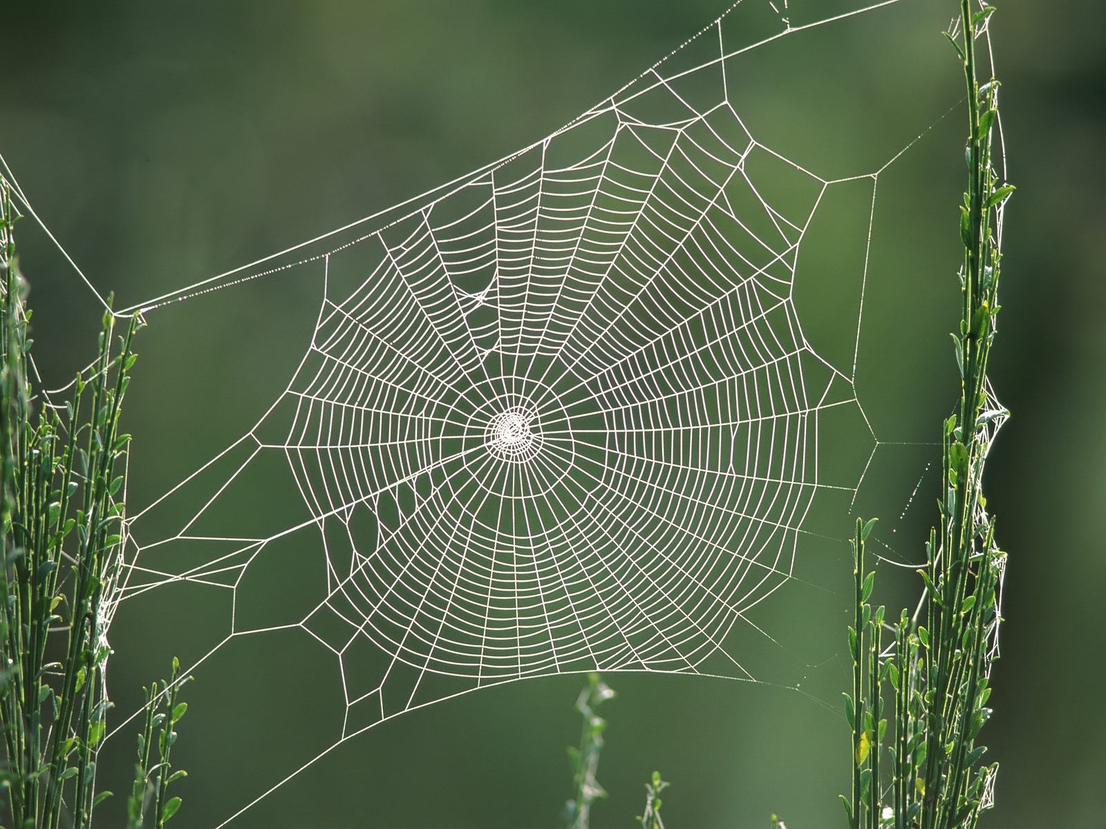 Drawn spider web cave Web 7 Desktop Wallpaper 7