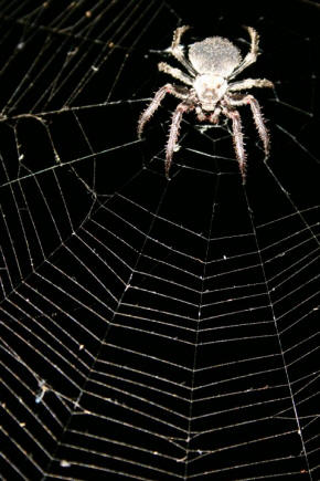Drawn spider web human Site in in world at