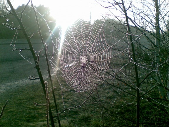 Drawn spider web magical tree A a between EarthSky How
