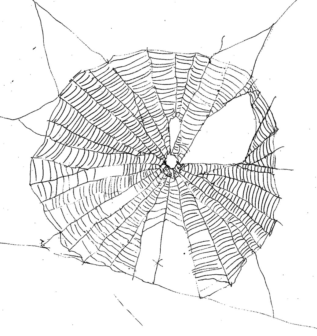 Drawn spider web nest Nest drawing Nest Spider Spider