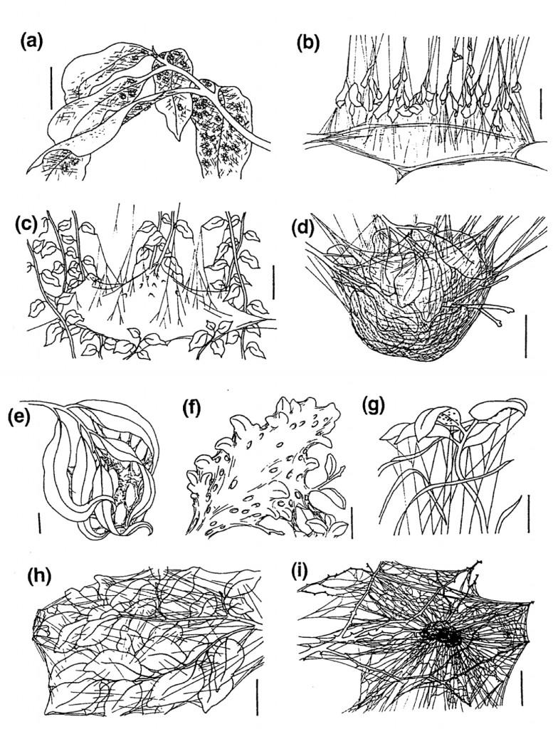 Drawn spider web social  Koryos Writes Nonfiction –