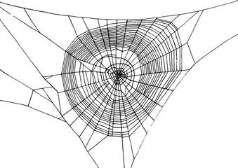 Drawn spider web social Hand