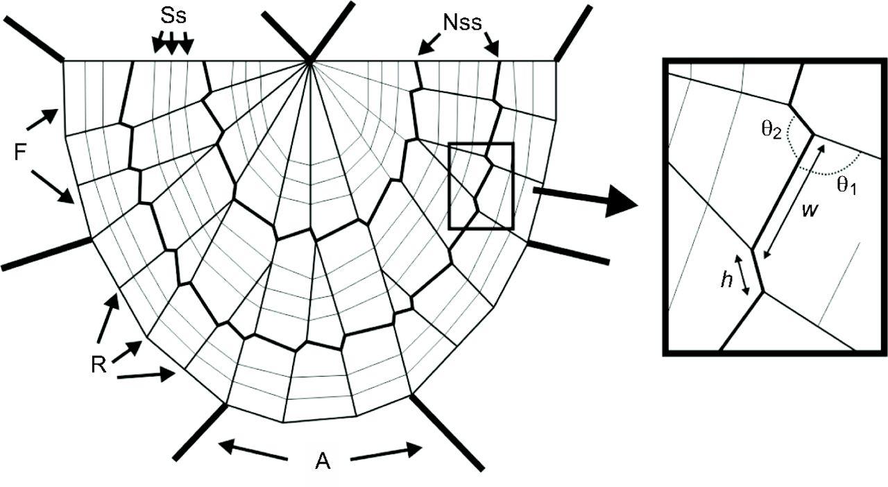 Drawn spider web spiral Orb Download non Nephila The