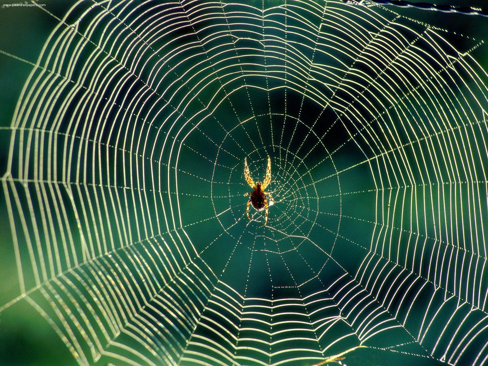 Drawn spider web spiral  Webs Proofs #91 God: