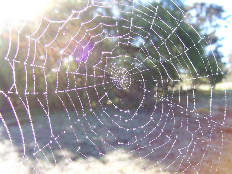 Drawn spider web wet Web spider Forensic Genealogy Orb