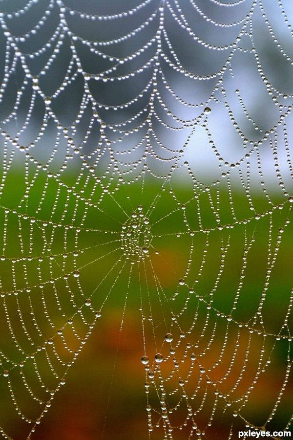 Drawn spider web wet Spider Morning Morning Web Web