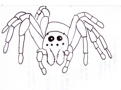 Drawn spider wolf spider Curly by More Five wolf