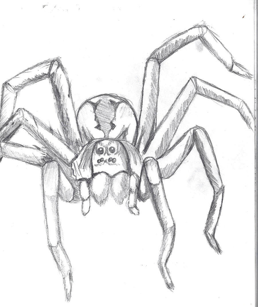 Drawn spider wolf spider Spider by DeviantArt xXgabby by