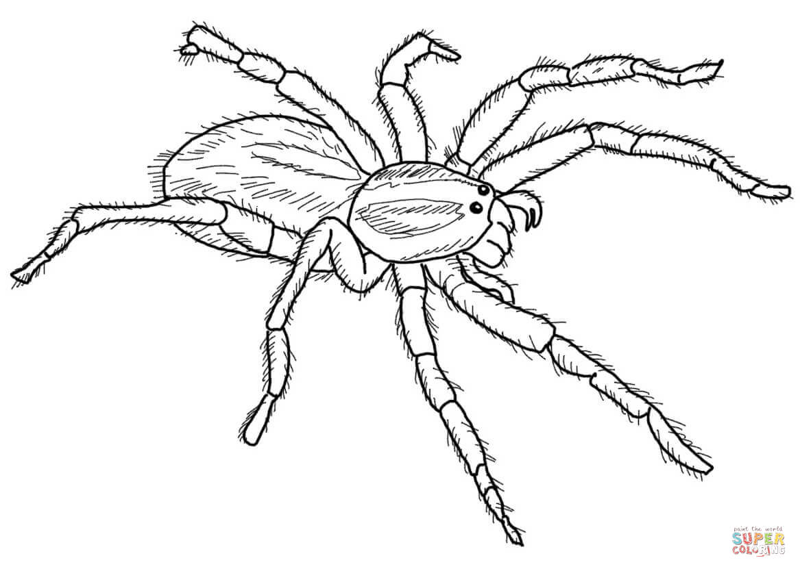 Drawn spider wolf spider Coloring Carolina Pages Free page