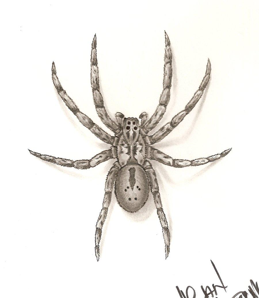 Drawn spider wolf spider Wolf by DeviantArt by spider