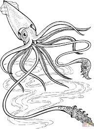 Drawn squid Search colossal squid Image drawing
