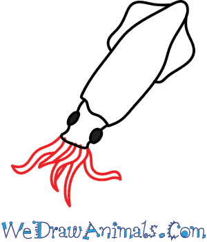 Drawn squid To Print a Tutorial Draw
