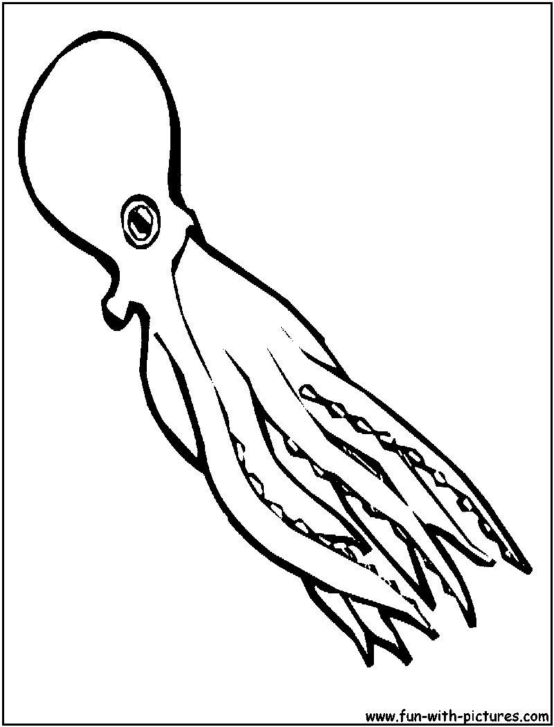 Drawn squid coloring page Pages and Squid print for