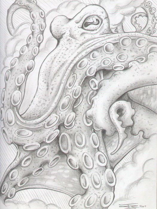 Drawn squid octopus Art Drawing Octopus  Fine