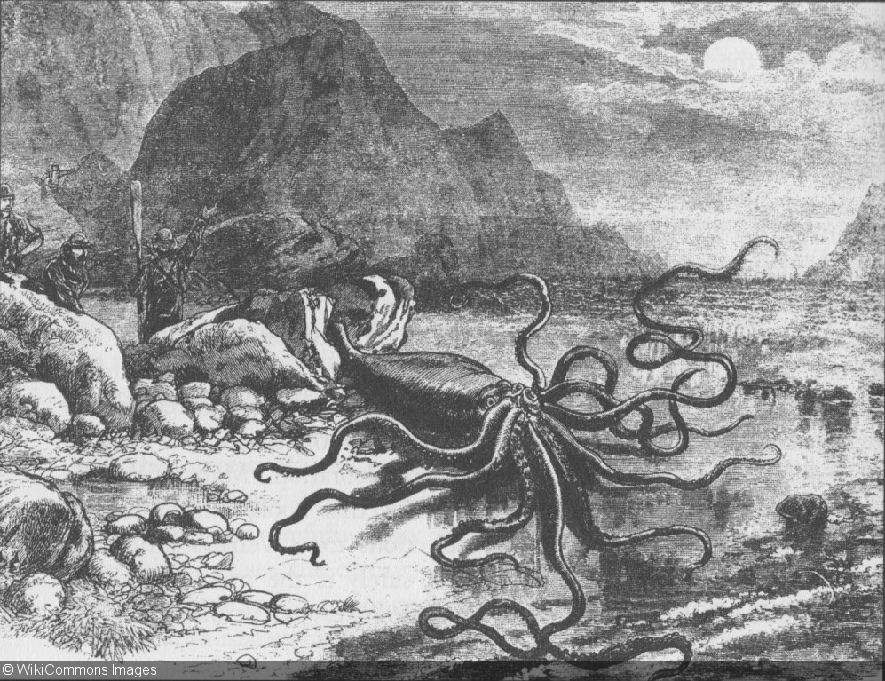 Drawn squid old scuba Giant Study: News Larger Grow