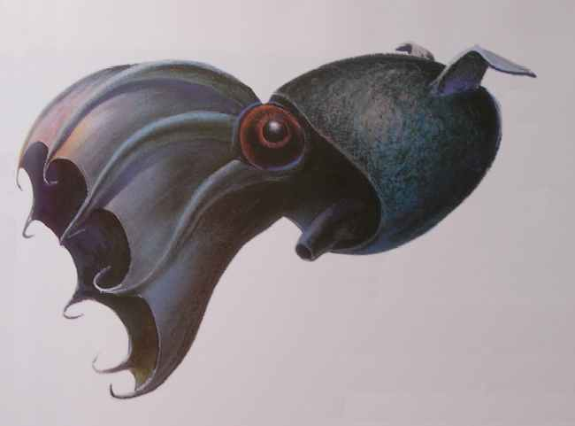 Drawn squid vampire squid To to The night this