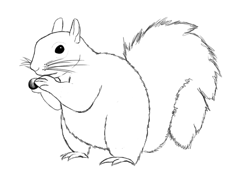 Drawn squirrel How Draw Central  A