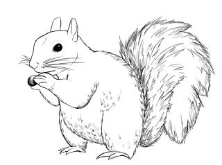 Drawn squirrel Central: images To 283 about