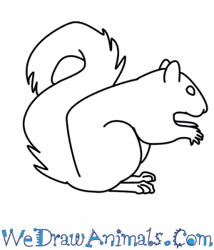 Drawn squirrel How Draw  A Squirrel