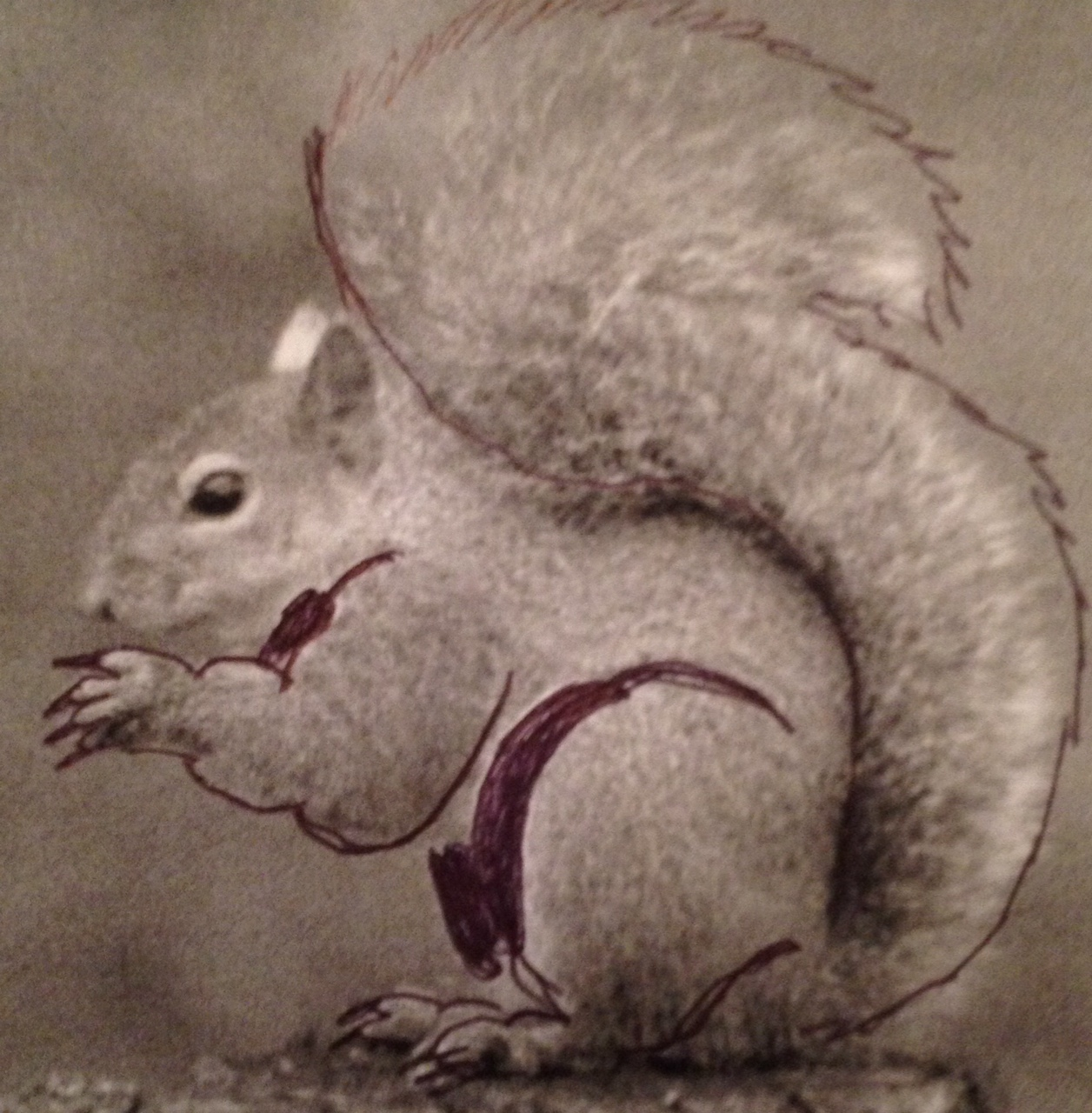Drawn squirrel mammal Gray Eastern into other mate