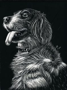 Drawn squirrel carnivore  Squirrel Scratch Scratchboard Decor