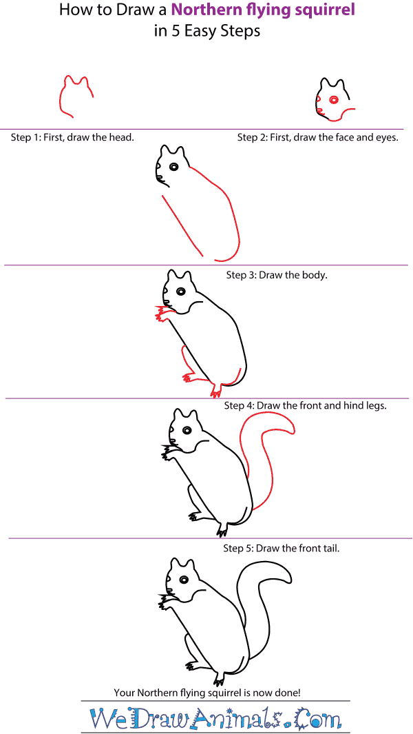 Drawn squirrel flying squirrel A to Step Tutorial Northern