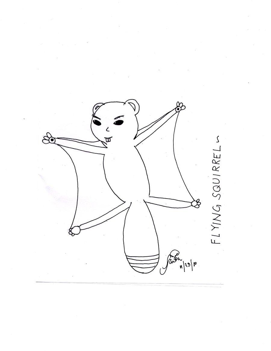 Drawn squirrel flying squirrel Squirrel Flying drawing Squirrel Drawing