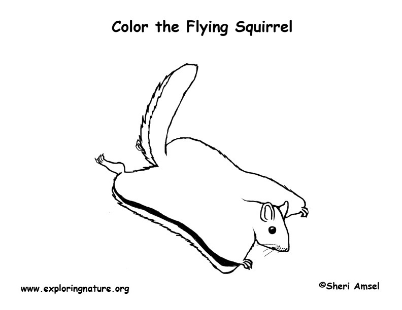 Drawn squirrel angry Squirrel Flying photo#9 Flying Drawing