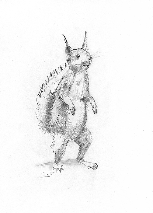 Drawn squirrel furry animal #animals 'Smiling Squirrel' #wild #pets