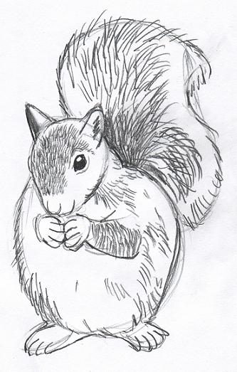 Drawn squirrel furry animal Longer fur Because you'll use
