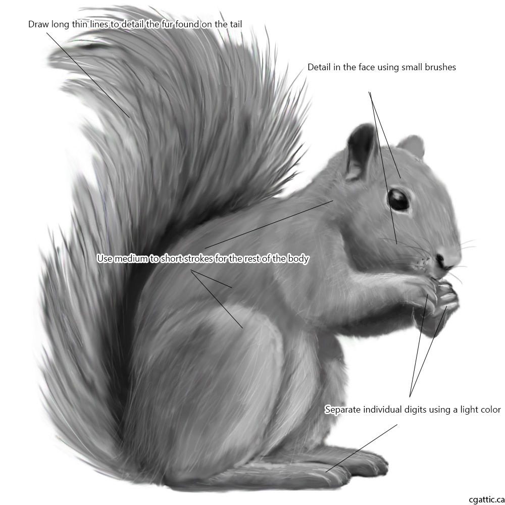 Drawn squirrel furry animal Techniques to Squirrel a Help